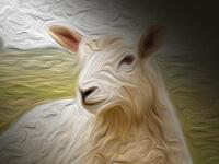 The Lamb - William Blake Free Poster